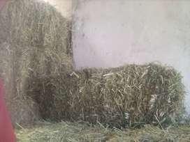 Venta de alfalfa de 1 era