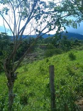 Sé vende finca con cacao potreros cultivos de yuca y plátano