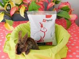 Alimento para conejos 1 Kilo peletizado Pellets Concentrado Conejo Nutrición Animal Cuido Conejina Marca Agrinal