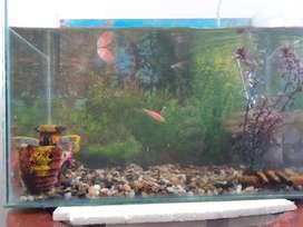 acuario para peces ornamentales