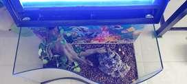 Acuario curvo con tapas luz LED, stiker, piedras de fondo raíz, cómo se ve en la foto