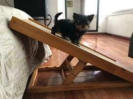 Escalera o rampa para mascota