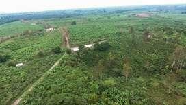 Venta de Plantación DE PLATANPO VERDE BARRAGANETE, Cacao, y Varios Sembrios Sector Manabí Productiva