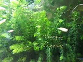 Plantas naturales para peceras tropicales o de agua fría