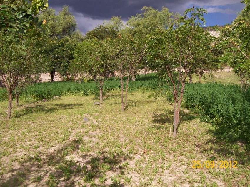 vendo fundo valle Ocopa Ayacucho