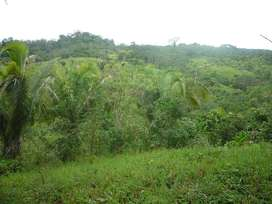 alquilo terreno agrícola