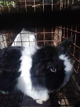 lvendemos conejos, varias razad