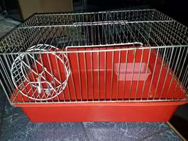 Aula para hamster