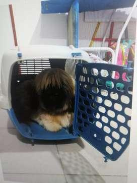 Guacal o cajón para trasportar su mascota