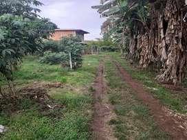 Parcela bien ubicadas y cercanas a la ciudad de Popayan