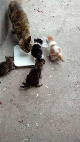 Hermosos gatitos(4)
