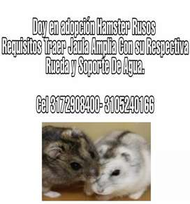 Adopcion Hamster