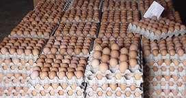 Huevos al por mayor AA y A