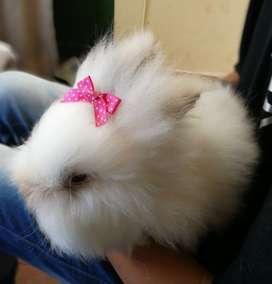 Conejos mascotas en Bogota.
