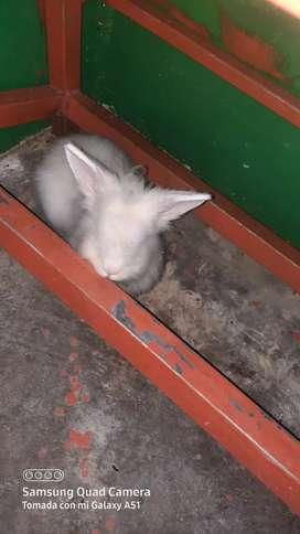 Hola estoy vendiendo un conejo