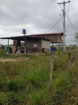 Venta de camaronera intensiva de agua dulce y 45 hectáreas  de terreno lpara sembrar arroz