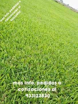 Venta Grass natural  Chiclayo -Lambayeque !!!
