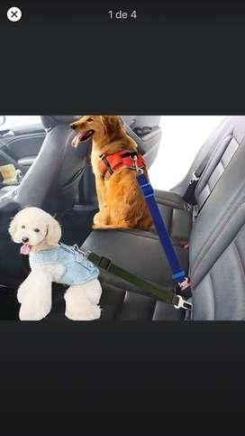 Correas para mascota en el auto
