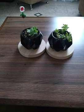 Hermosas macetas con soporte en madera