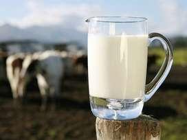 Se busca distribuidores de lácteos.