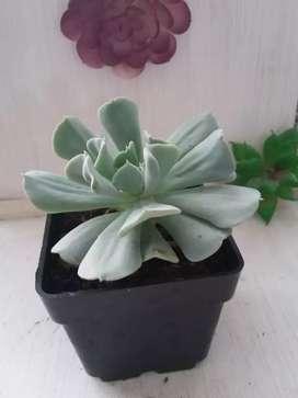 Hermosos cactus y suculentas
