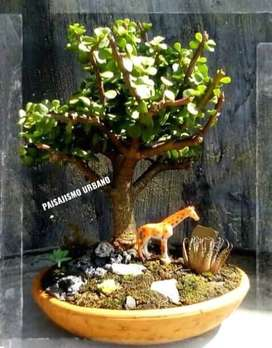 Bonsai mini jardin