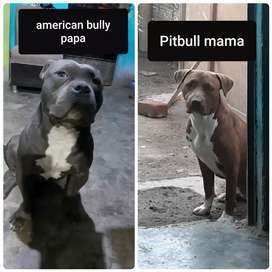 Cachorros fusion