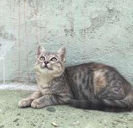 En adopcion gatita