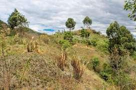En Venta Finca de 1.17 hectáreas entre Yangana y Vilcabamba
