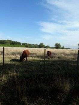 campo de 20 hectareas en excelente zona y precio
