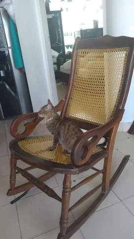 Adopción gatita