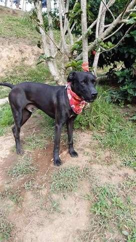 En adopcion perro: queensito (criollo)