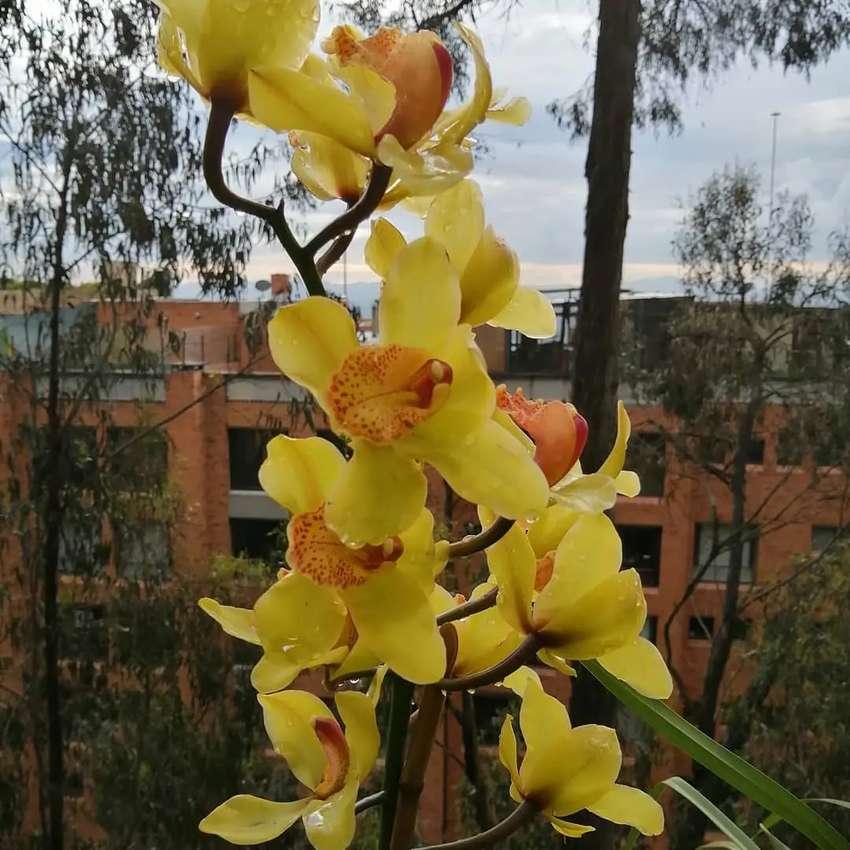 Venta de orquídeas 0