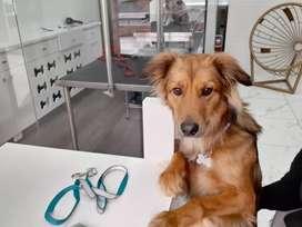 Peluquero - Groomer canino con experiencia comprobable