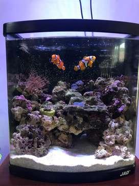 Vendo acuario marino 70l