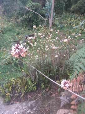 Orquídeas de diferentes especies