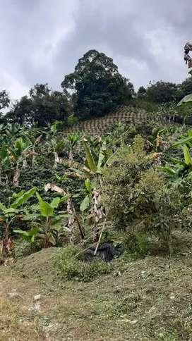 Vendo finca en sasaima ( Cundinamarca)