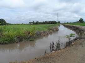 Venta tierras 30has ideal arroz o banano o cacao, sector Churute