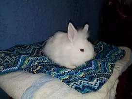 Ventas de conejos para mascotas