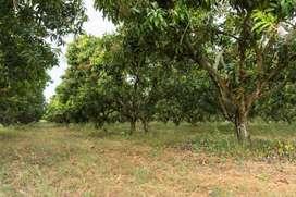 venta de finca de 70 hectareas en dureno