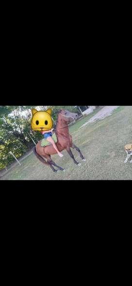 caballo cuarto de milla