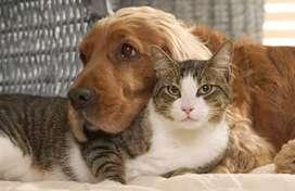 Asistencia veterinaria en casa