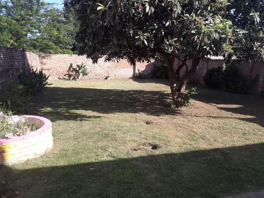 Servicio de jardineria 0