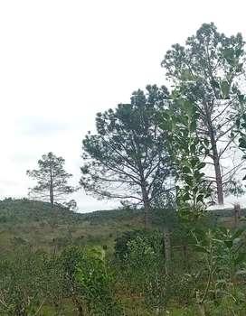 Gran oportunidad cerca del centro de obera luz agua y mucho monte nativo algunas plantaciones maíz mandioca yerba