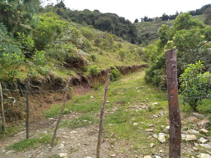 Se vende lote apto para cultivo de aguacate