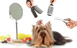 Servicio a domicilio de peluquería canina.