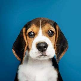 medicina alternativa natural veterinaria de avanzada para mascotas cali