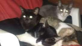 Adopción para gatitos