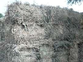 Venta de alfalfa seca de buena calidad.