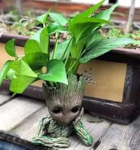 Groot maceta o porta lapiz con planta o sin desde $10